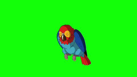 Colorful parrot wakes up HD green screen Animation