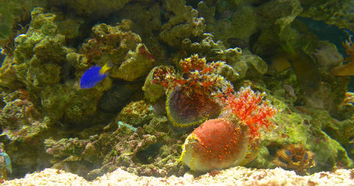 Small Colorful Deep Sea Coral Fish In Aquarium Live Action