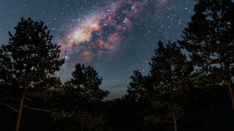 pine night 3 264 Footage