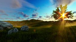 Tree of life on a green meadow, beautiful sun rays Animation