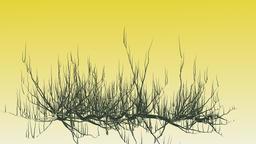 Growing plants at sunrise Animation