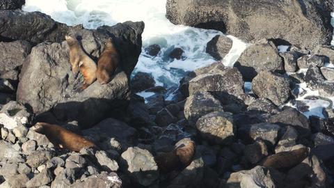 Seal Rock Pacific Ocean Oregon Coast Surf Tide Wildlife Footage