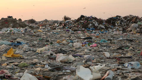 Landfill and birds at sunset Footage