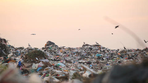 Landfill and birds at sunset Filmmaterial
