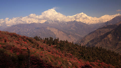 Dhaulagiri Rhododendrons Time Lapse Animation