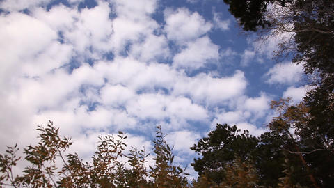 Clouds over tops of trees Footage