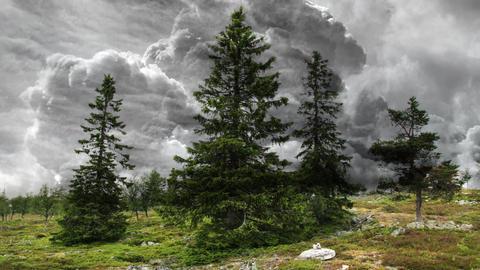 Fantasy Landscape Animation