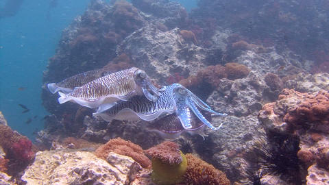 Exciting underwater diving in the Andaman sea. Thailand.... Stock Video Footage