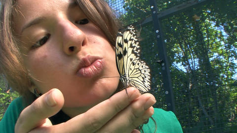 The joy of companionship with butterflies. Thailand. Phuket Footage