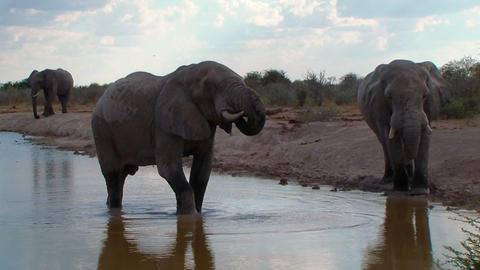 Elephants close up bathing in waterhole Botswana Footage