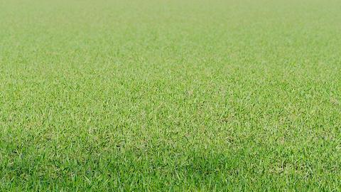 Pan field grass spring Footage