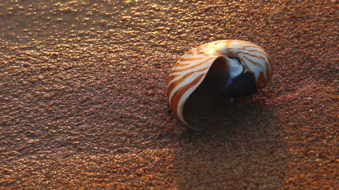 Shell on Beach Stock Video Footage