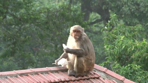 Nepal 220 Stock Video Footage