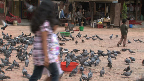 Kids passing by a big group pigeons Stock Video Footage