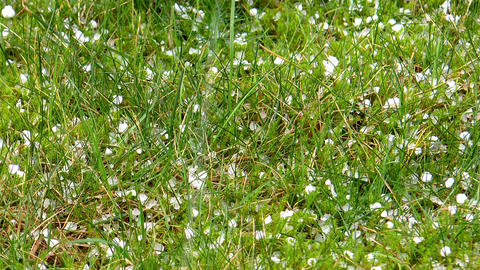 Hailstones Falling On Grass stock footage