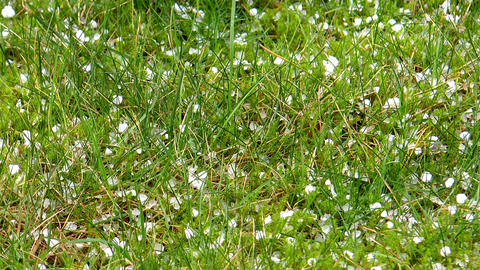 hailstones falling on grass Stock Video Footage
