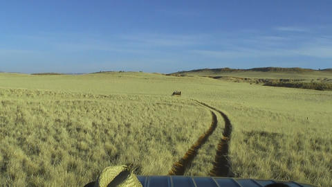 jeep safari in namibia grassland POV Stock Video Footage