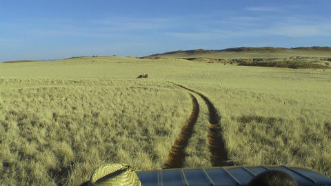 jeep safari in namibia grassland POV Live Action