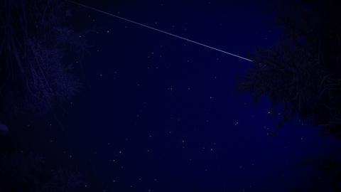Starry sky in the forest Stock Video Footage