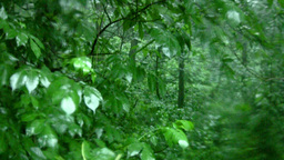 Rain in the forest Stock Video Footage