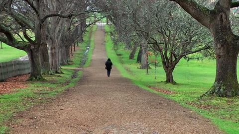 tree alley in port arthur,tasmania Stock Video Footage