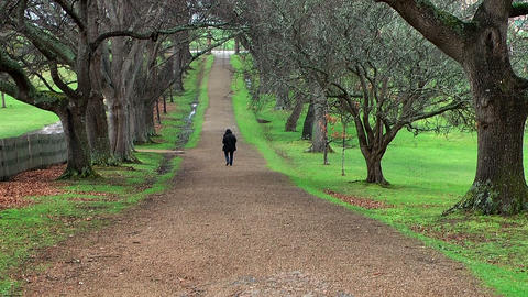 tree alley in port arthur,tasmania Stock Video Footage