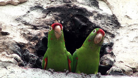 couple of parrots sitting in front of a cavern Stock Video Footage