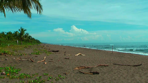 Beach at tortuguero national park in Costa Rica Stock Video Footage