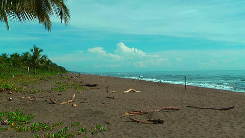 Beach at tortuguero national park in Costa Rica Live Action