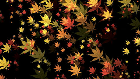 Canvas Leaves Stock Video Footage