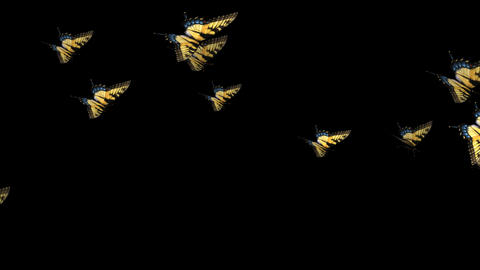 Swallowtail Butterfly Transition - 12 Animation