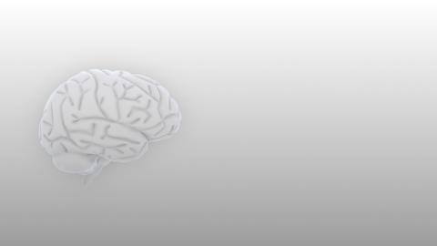 Brain 2 A 2 S HD Stock Video Footage