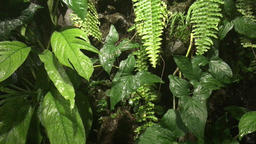 Ferns and palm leaves against waterfall Footage