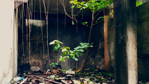 Green tree growing out of concrete floor and lianas hanging on walls captured by Footage