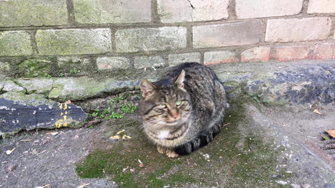 Street cat sitting next to a brick wall, day Live Action