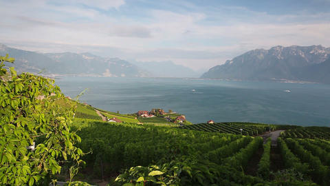 Vineyards of the Lavaux region over lake Leman Footage