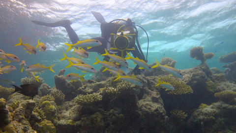 Underwater videographer shoots a flock of tropical fish. Diving on the reefs of Footage