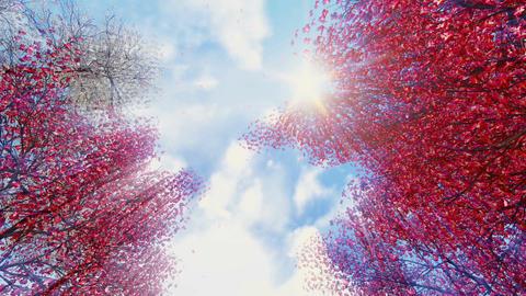 Blooming sakura falling petals against sunny sky Footage