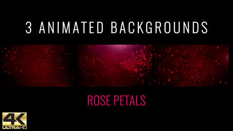 Rose Petals Background Animation