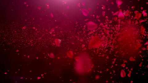 Rose Petals Stock Video Footage