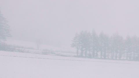 Snowfall in the forest,in Obihiro,Hokkaido,Japan,Filmed in 4K Footage