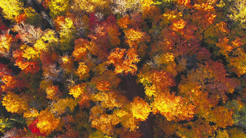 Algonquin Provincial Park , Canada, Video - Ontario, Canada at Fall. Take off vi Live Action