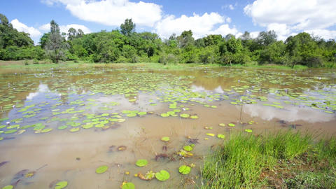Water Lilies in Karura Forest Lake, Nairobi, Kenya Footage