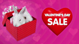 Falling gift box surprise on Valentines day sale, funny couple of bunnies Footage