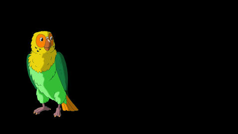 Green parrot walks and stops HD alpha channel Animation