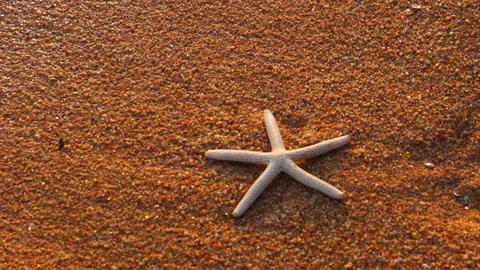Starfish on Beach Footage
