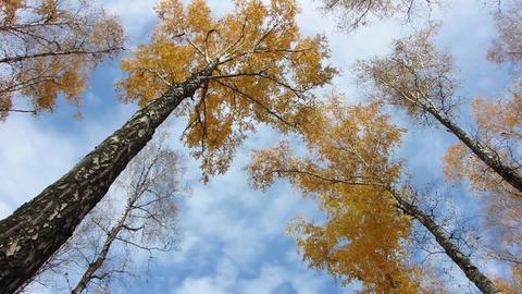 Autumn wood Stock Video Footage