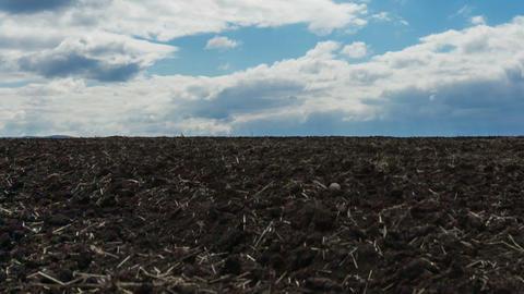 Plowed field Stock Video Footage