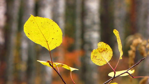 Landscape autumn Stock Video Footage