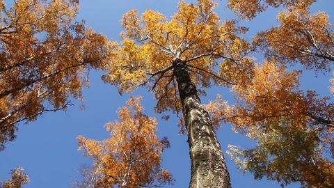 Landscape autumn Footage